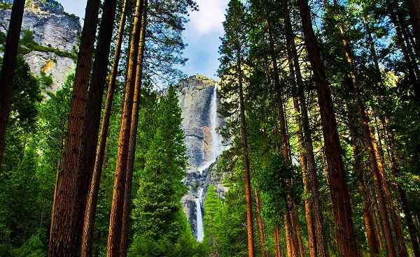BESTE-KALIFORNIEN Yosemite Waterfalls behind Sequoias 128950319