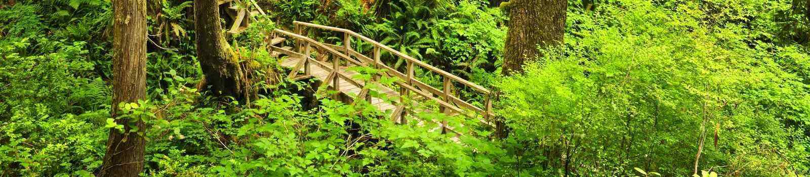 CAD-RM-RGRC  Kanada Vancouver Island Wooden path through temperate rain forest. Pacific Rim National Park