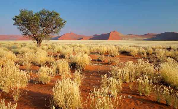 KL-TRANS-AFRICAN-LODGE Desert landscape with grasses  red sand dunes and an African 64062520