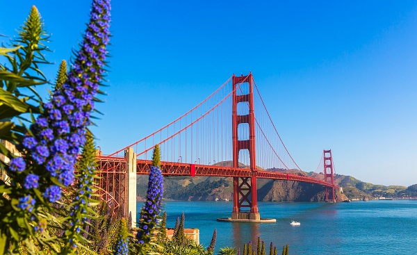 NATUR-CAMP-WEST Golden Gate Bridge San Francisco purple flowers Echium candicans in California shutterstock 171878780