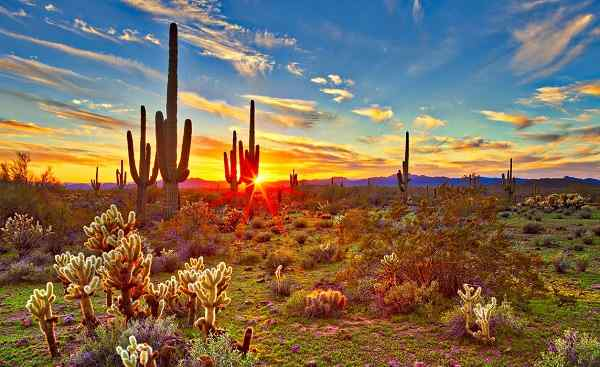 NATUR-CAMP-WEST Saguaros at sunset in Sonoran Desert near Phoenix shutterstock 550221112