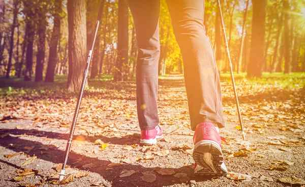 Nordic walking adventure and exercising concept - woman hiking  legs and nordic walking poles in autumn nature  With flare and light leak shutterstock 488859802