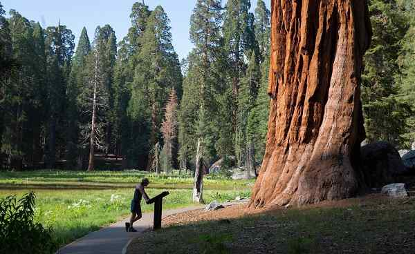 SEQUOIA-NATIONALPARK Kalifornien in front of giant sequoia tree  151583216